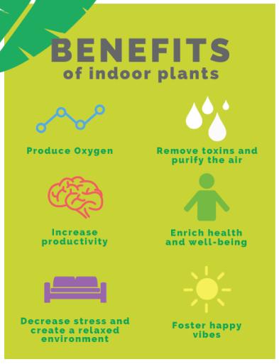 Benefits-of-Indoor-Plants-1